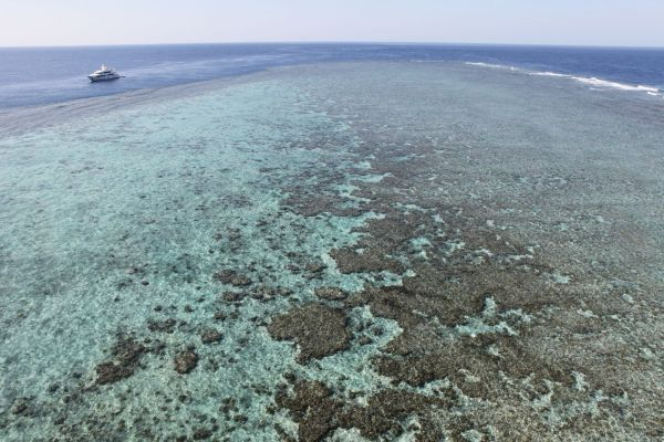 Coral Reef on A Red Sea Yacht Charter