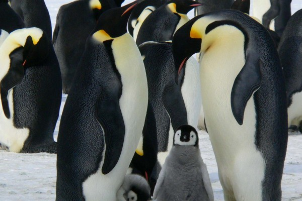 yacht-zoo-destinations-antarctica04