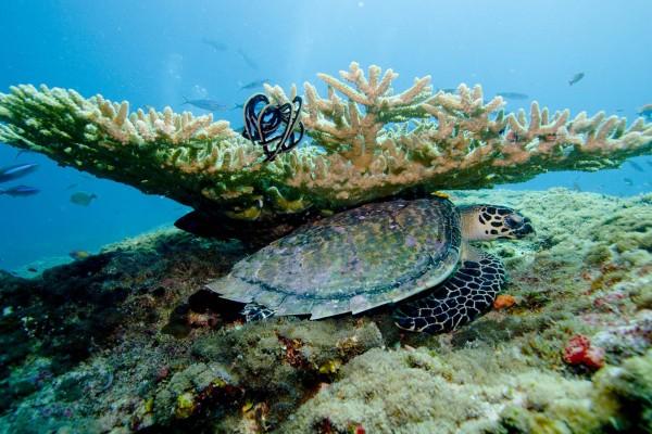 yacht-zoo-destinations-maldives02