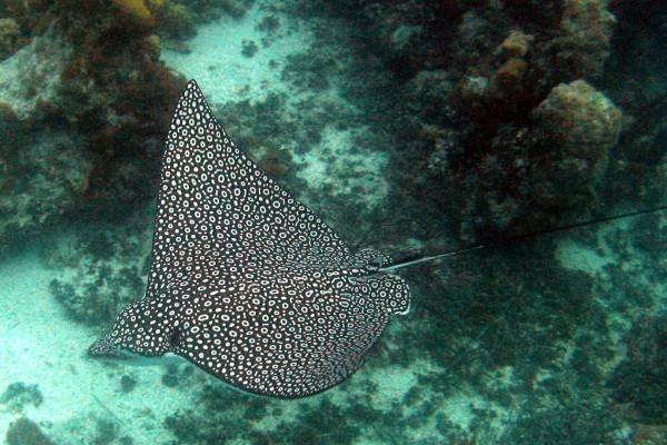 yacht-zoo-destinations-maldives09