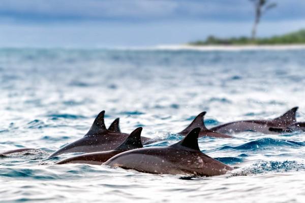 yacht-zoo-destinations-seychelles05