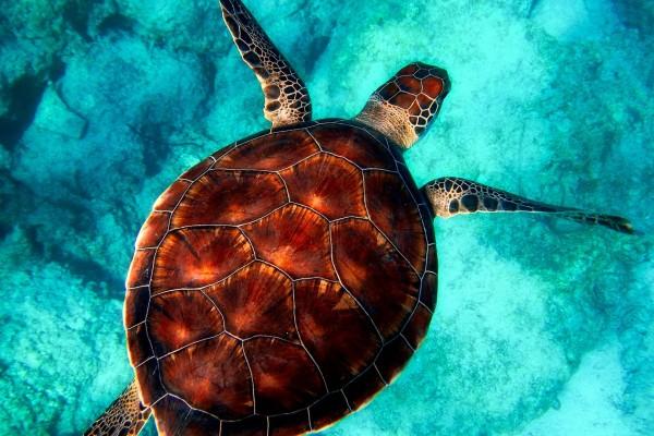 yacht-zoo-destinations-seychelles07