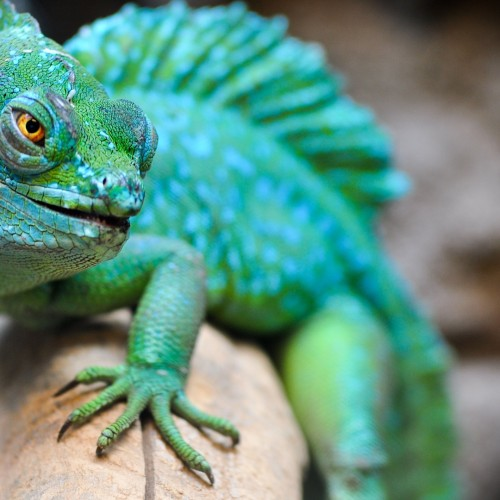 Chameleon - Nature Experiences on a Yacht Charter