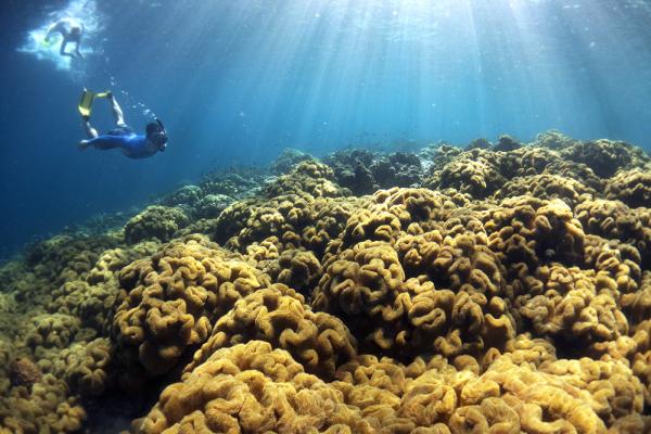 Snorkeling Heaven Munda - David Kirkland