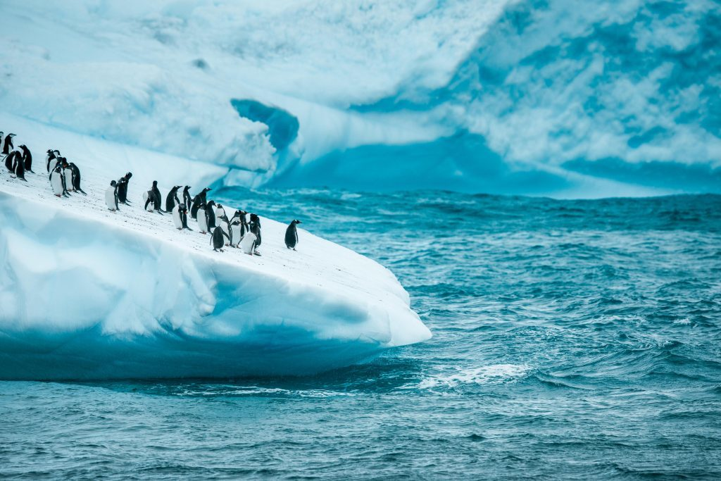 Penguin Colony Spotted in Antarctica by Yacht