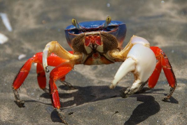 Halloween Crab on a Costa Rica Yacht Charter