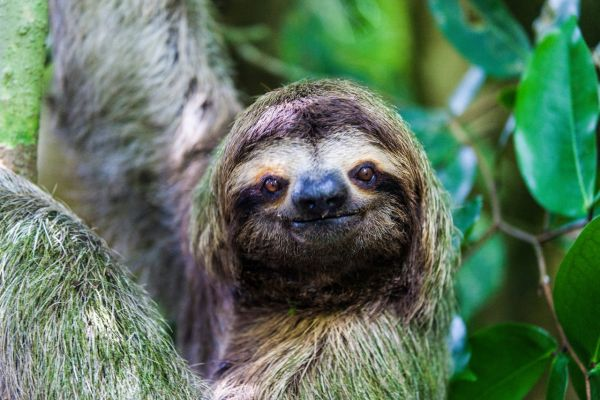 Sloth on a Costa Rica Yacht Charter