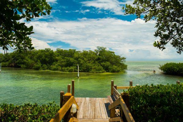 Mangroves on Florida Keys Yacht Charter