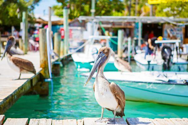 Pelican on Florida Keys Yacht Charter